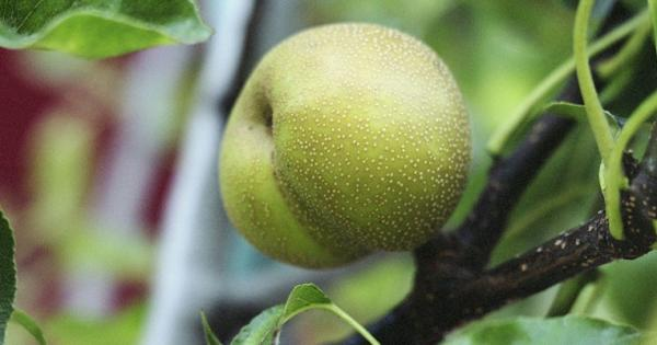 Guerrilla Grafting: Public Trees Spliced to Bear Edible Fruit