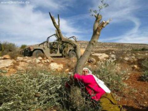 Destruction Of Palestinian Olive Trees Is A Monstrous Crime Portside