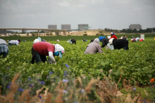Workers working in the fields.