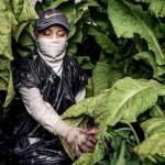 Big Tobacco Sees Big Profits from US Poor feature image
