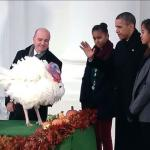 Pardoning Turkeys, Not People? feature image