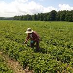 Farmworkers Seeking Safeguards feature image