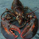 Maine Lobstermen's Union Votes to Buy Hancock feature image