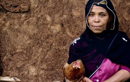 The ILRI has argued that chicken farming is a strong vehicle for small-scale entrepreneurship and female empowerment in Africa.