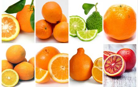 These are a very few of the many varieties of oranges.