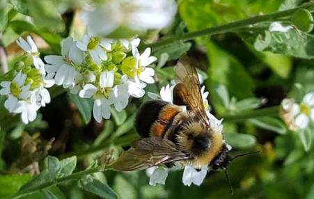 photo of bumble bee