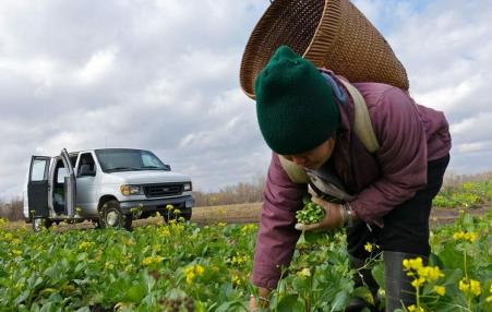 Long-term land ownership will bring change to Hmong farmers hoping to improve family farm operations.