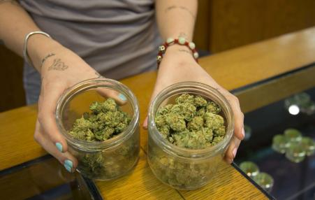 person's hands showing marijuana choices